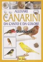 Allevare canarini da canto e da colore