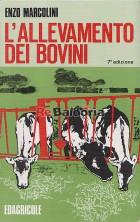 L'allevamento dei bovini