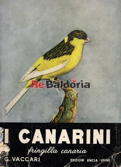 I canarini - Fringilla canaria